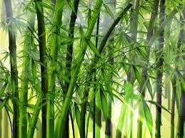 filosofi bambu