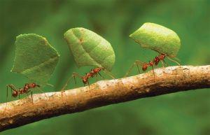 kisah antara semut dan manusia