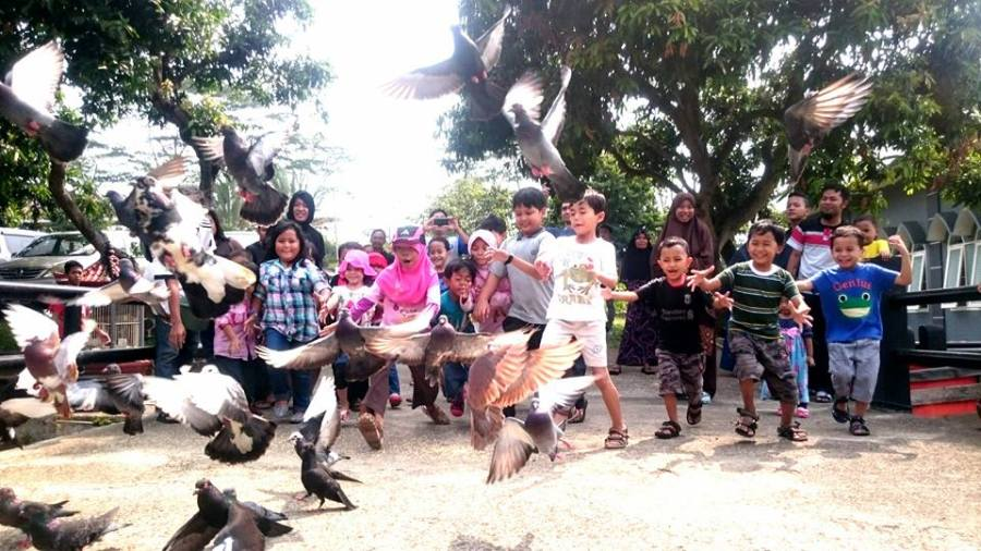 mmenangkap burung merpati bersama bitubi tda depok