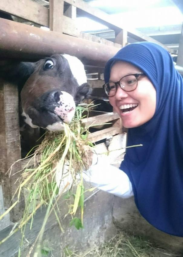 bersama anak sapi